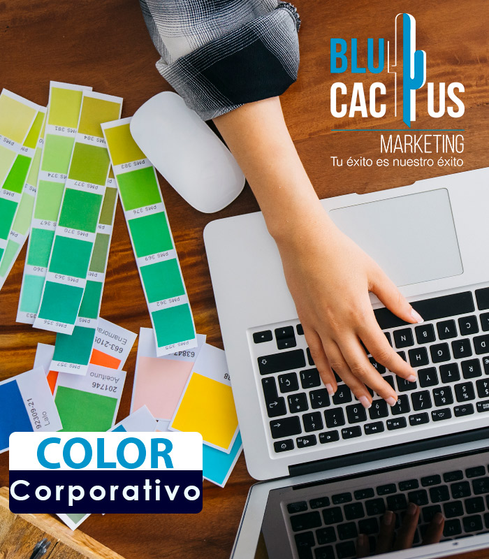 Blucactus Color Corporativo