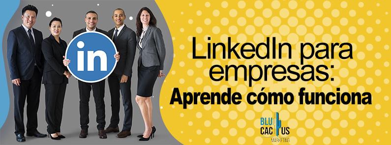 BluCactus - LinkedIn para Empresas - titulo