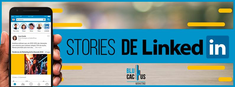BluCactus -Stories de LinkedIn - titulo